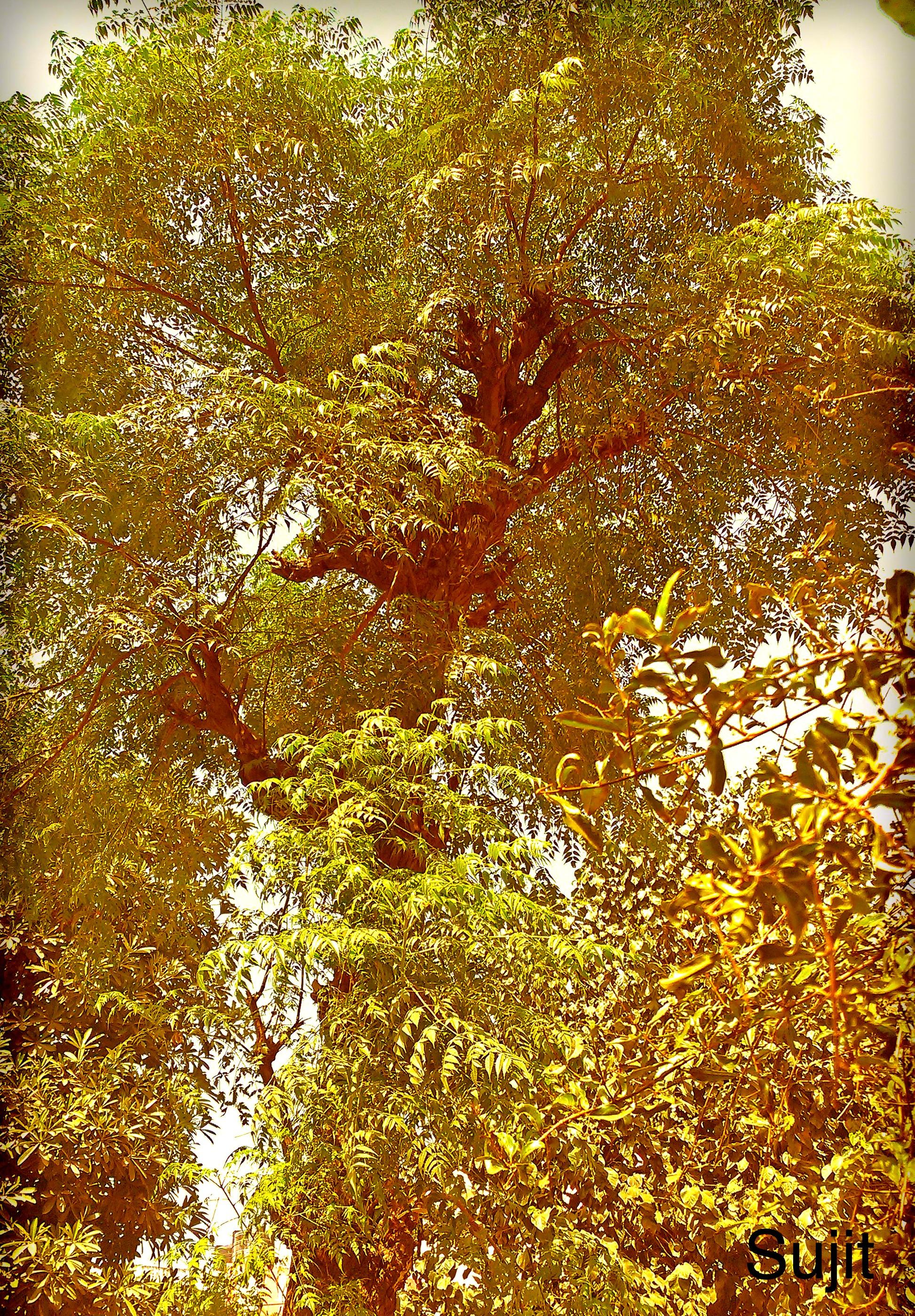 Hindi Poem on Tree Life