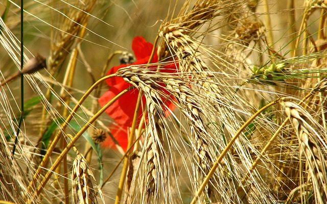 eastern wind bihar poem