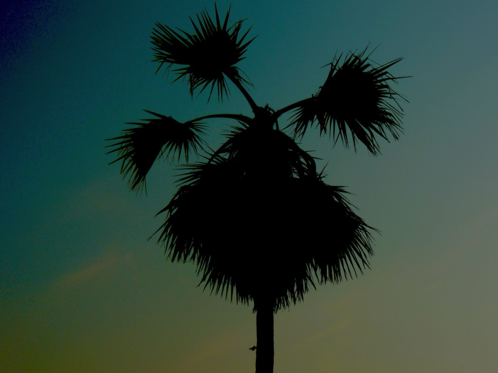 Sujit Photography