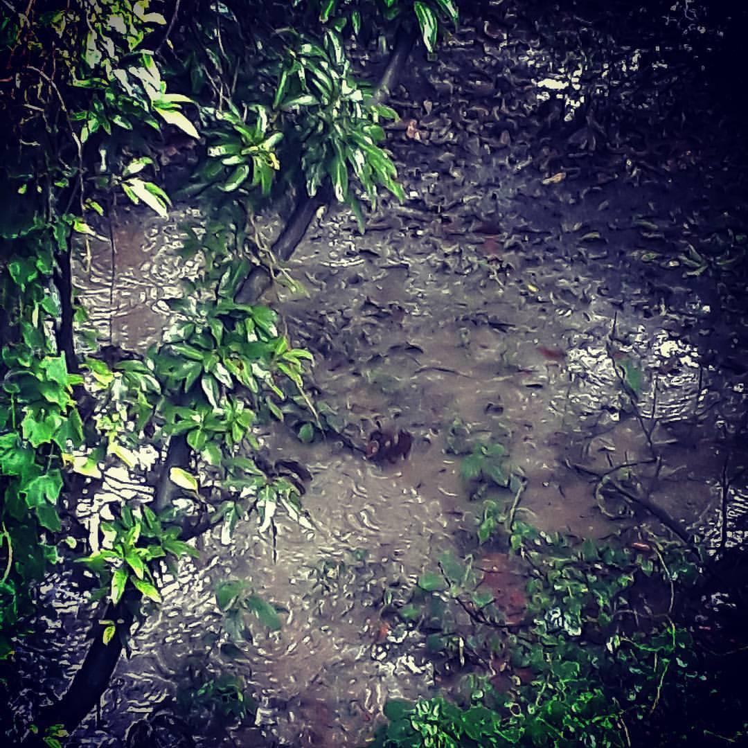 Rain & Poetry